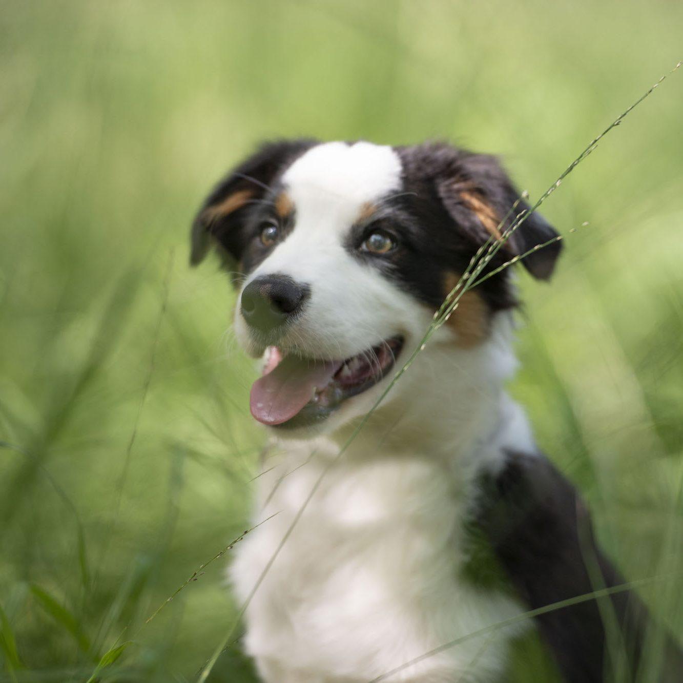 Cooper Therapiehond